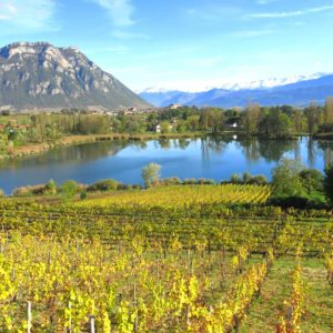 wines and terroir i the alps