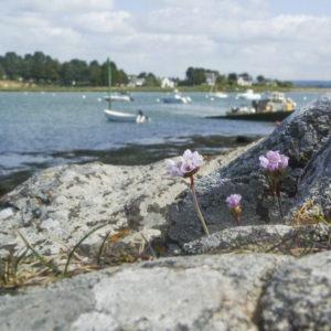 Pointe du passage, gros plan d'un rocher Morbihan